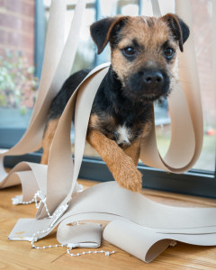 pets-and-your-blinds
